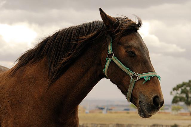 abandoned-horses-spain