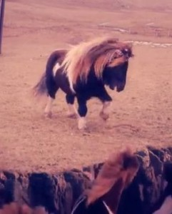 [Video] Remix een pony