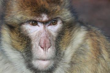 eindeloos-typende-apen