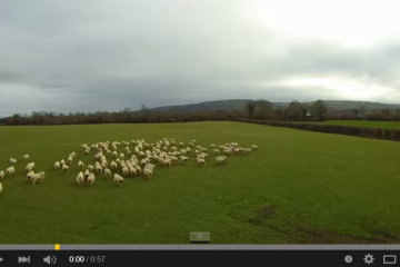 SHEP the Drone - Worlds first Drone Sheepdog - YouTube