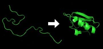 Protein folding